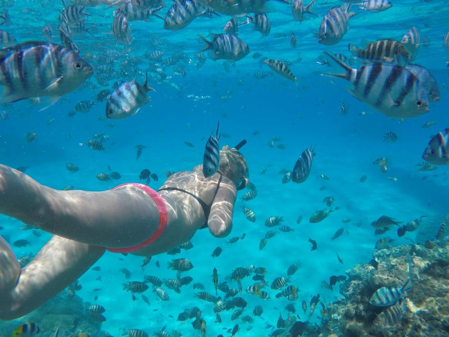 snorkeling between the fishes and corals