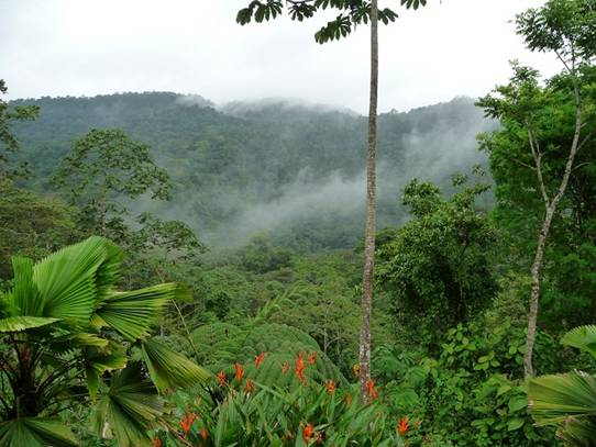 costa rica jungle