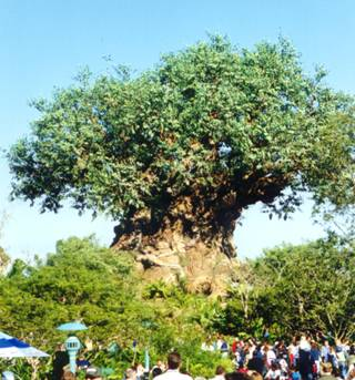 Tree - Animal Kingdom