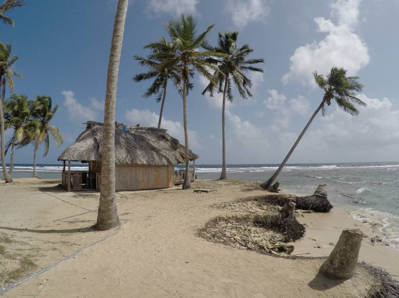 Palms and Accommodation hut in San Blas island