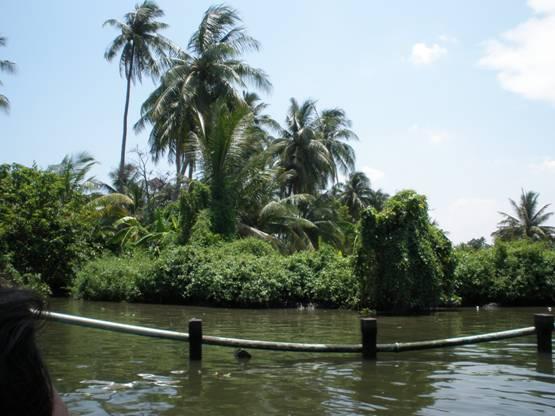 джунгли возле реки